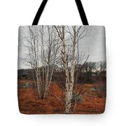 Birch On A Rocky Hill  Tote Bag