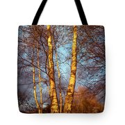 Birch Tree In Golden Hour Tote Bag
