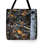 Birch Tree In Winter Tote Bag