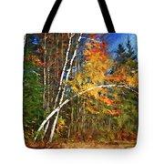 Birch Trees - Autumn Tote Bag