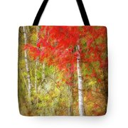 Birch Trees In Autumn Tote Bag