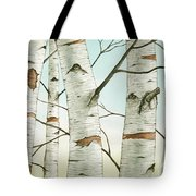 Birch Trees In Late Autumn Tote Bag