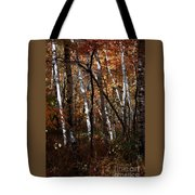 Birch Trees In The Fall Tote Bag