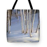 Birch Trees In The Snow, South Tote Bag