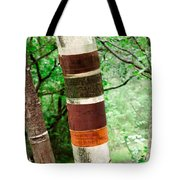 Birch Wood Tree  Tote Bag