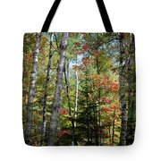 Birches In Fall Forest Tote Bag
