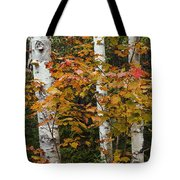 Birches In Fall Tote Bag