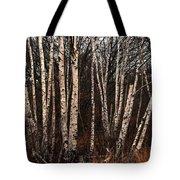 Birches In The Rain Tote Bag