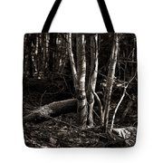 Birches In The Wood Tote Bag