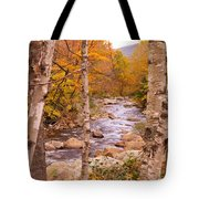 Birches On The Kancamagus Highway Tote Bag