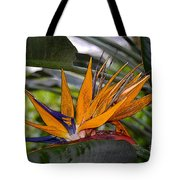 Bird Of Paradise Work Number Three Tote Bag