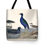 Bird Prints American Ornithology Tote Bag