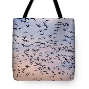 Birds A Flock Of Seagulls Tote Bag