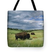 Bison And Their Calves Graze In Custer Tote Bag