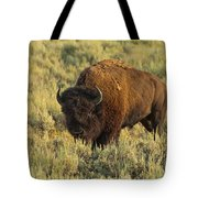 Bison Tote Bag by Sebastian Musial