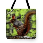 Black Abert's Squirrel - Half And Half Tote Bag