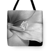 Black And White Amaryllis Bloom Tote Bag