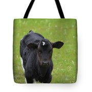 Black And White Calf Standing In A Field Tote Bag