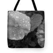 Black And White Dewy Pansy 1 Tote Bag