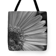 Black And White Gerber Daisy 5 Tote Bag