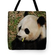 Black And White Panda Bear Eating Green Bamboo Shoots Tote Bag