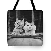 Black And White Portrait Of Two Aadorable And Curious Cats Looking Down Through The Window Tote Bag