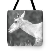 Black And White Pronghorn Portrait Tote Bag