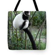 Black And White Ruffed Lemur Tote Bag