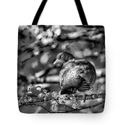 Black And White Shy Tote Bag