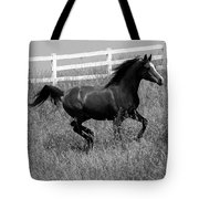 Black And White Steed Tote Bag