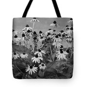 Black And White Susans Tote Bag