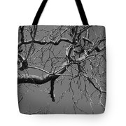 Black And White Tree Branch Tote Bag