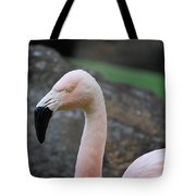Black Beak On A Chilean Flamingo Tote Bag