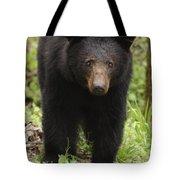 Black Bear At Cades Cove Tote Bag