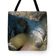 Black Bear Oh My Tote Bag