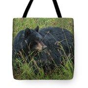 Black Bear Sow Tote Bag