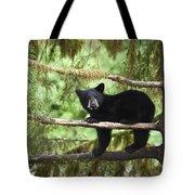 Black Bear Ursus Americanus Cub In Tree Tote Bag