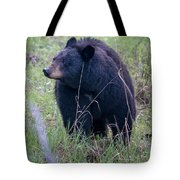 Black Bear Yellowstone Np_grk7085_05222018 Tote Bag