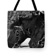 Black Beauties Tote Bag by Stuart Turnbull