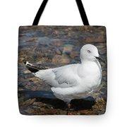Black-billed Gull Tote Bag