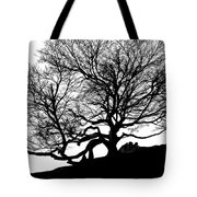 Black Birch Silhouette 2009 07 Tote Bag
