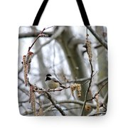 Black-capped Chickadee 20120321_39b Tote Bag