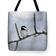 Black-capped Chickadee, Alberta Tote Bag
