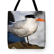 Black Crested Gull Tote Bag