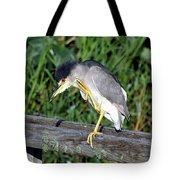 Black Crown Night Heron Scratching Tote Bag