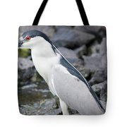 Black Crowned Night Heron Tote Bag