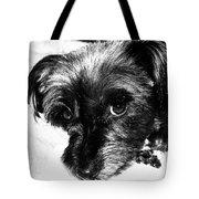 Black Dog Looking At You Tote Bag
