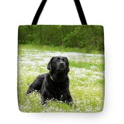 Black Lab Laying In A Field Tote Bag