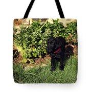 Black Labrador Retriever Puppy Tote Bag