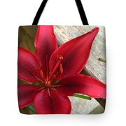 Black Center Day Lily  Tote Bag